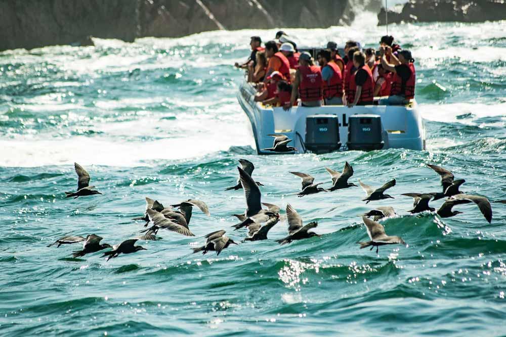 Peru: Islas Balestas, Paracas