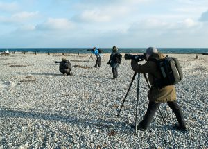 Fotoworkshop Robbenbabys fotografieren auf Helgoland